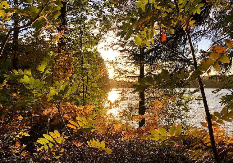 Autumn atmosphere at Torrsjö