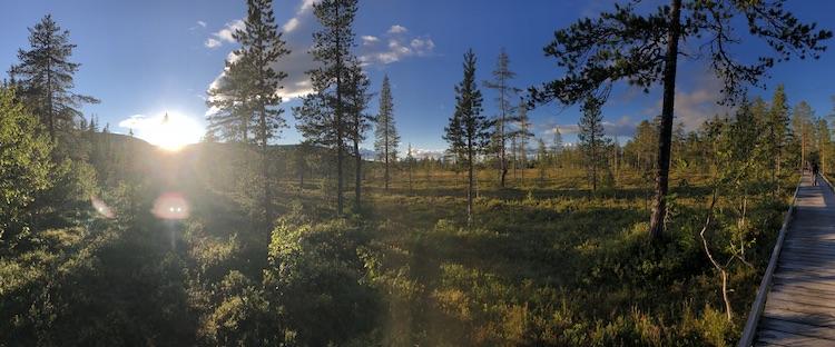 Primeval forest of the Fulufjället national park