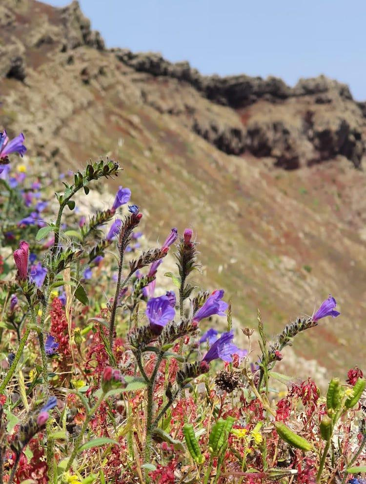 Flowers at the crater of Vulcano La Corona